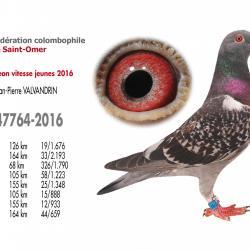 As pigeon vitesse jeunes
