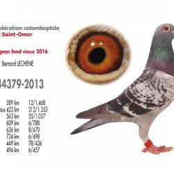 As pigeon fond vieux