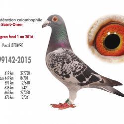 As pigeon fond 1 an