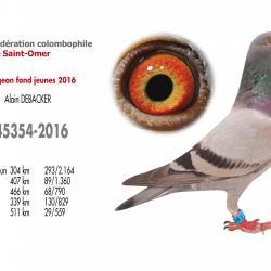 As pigeon fond jeunes