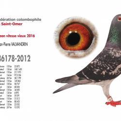 As pigeon vitesse vieux