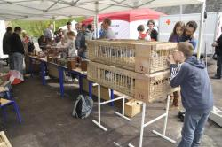 helfaut-coupole-pigeons-4.jpg