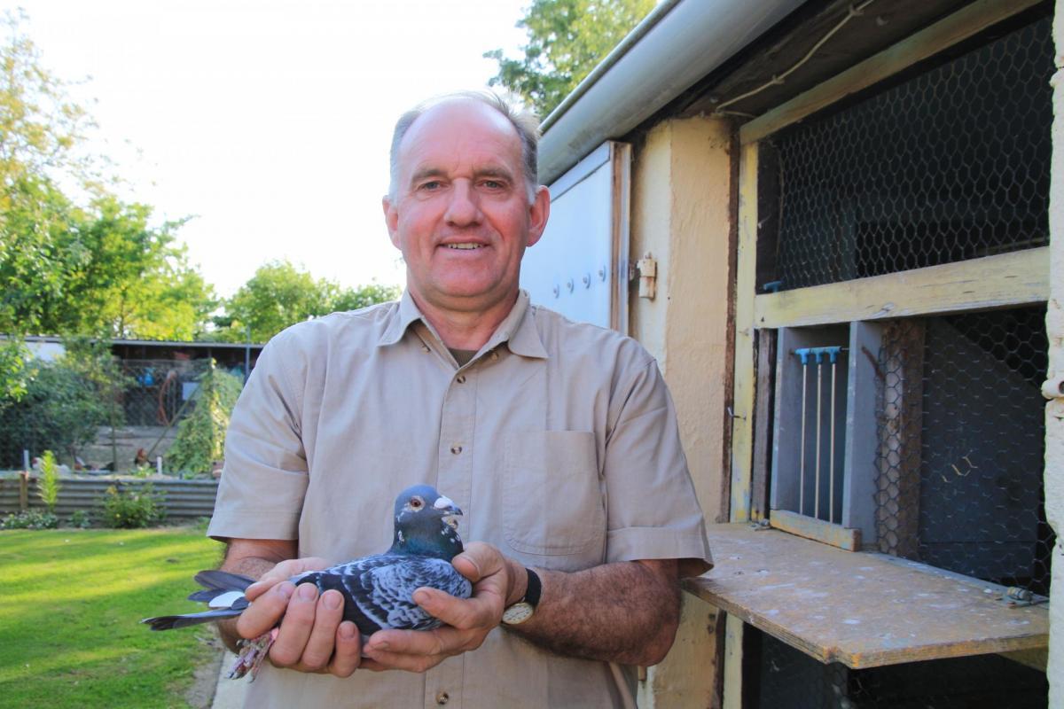 Pigeons racquinghem michel vasseur 1er juin st junien 1 an